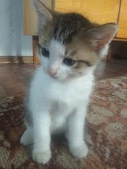 Котенку срочно нужен дом,