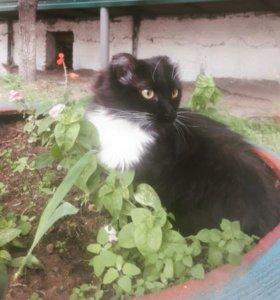 Молодой котик ищет дом