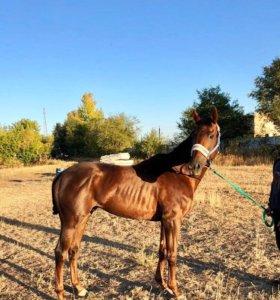Перевозка лошадей и других животных.