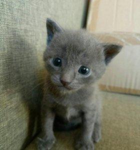 Котята - мышеловы в добрые руки.