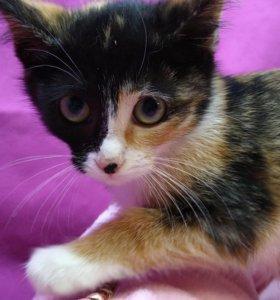 Диана - кошечка девочка 3 месяца