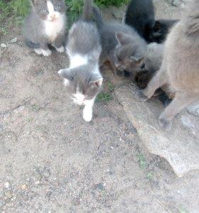 Котятки в добрые руки!