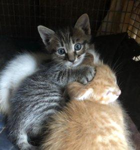 Красивые котята в хорошие руки !