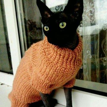 одежда для кота купить в лабинске цена 200 руб дата размещения