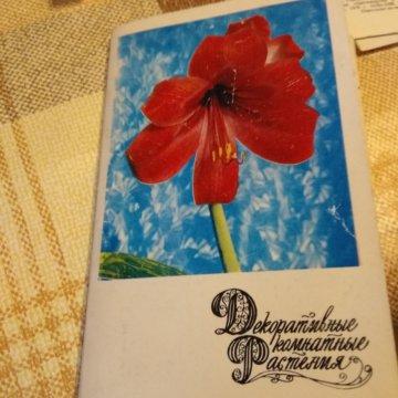 делается набор открыток декоративные комнатные растения протяжении всего