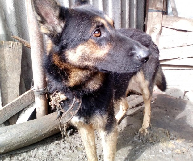 Собака. Фото 1.