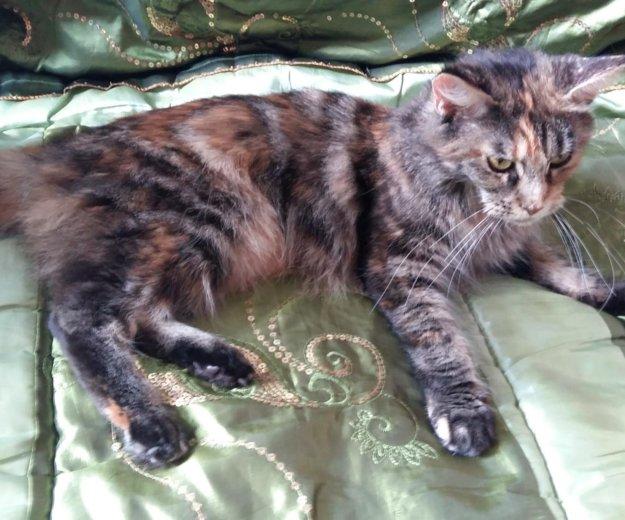 Кошка. Фото 2. Астрахань.
