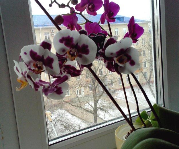 Орхидеи + кашпо (стекло). Фото 1. Омск.