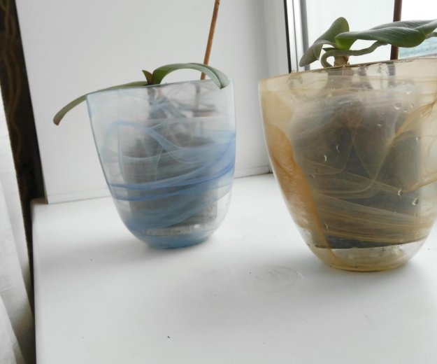 Орхидеи + кашпо (стекло). Фото 3. Омск.