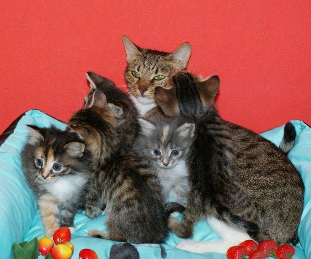 Котятки в добрые руки. Фото 4. Балашиха.