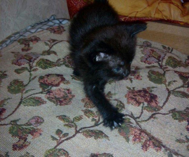 Котята. Фото 2. Армавир.
