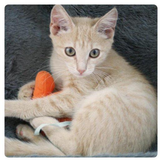 Котёнок мишель. Фото 2. Раменское.