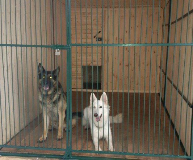 Дрессировка собак с передержкой. Фото 1.
