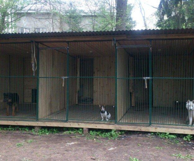 Дрессировка собак с передержкой. Фото 3.