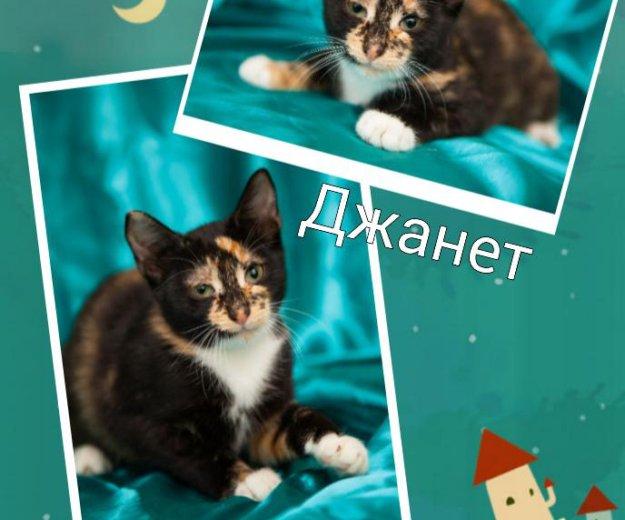 Котенок ищет дом. Фото 1. Москва.