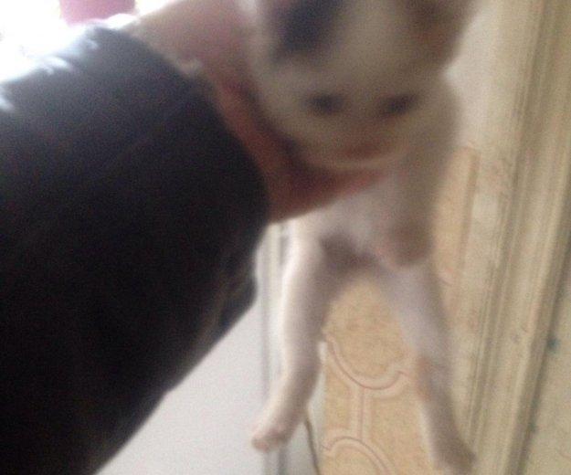 Отдам котят. Фото 2. Динская.