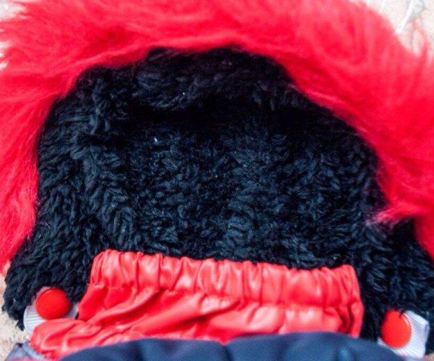 Комбинезон для собаки мелкой породы. Фото 3. Красноярск.