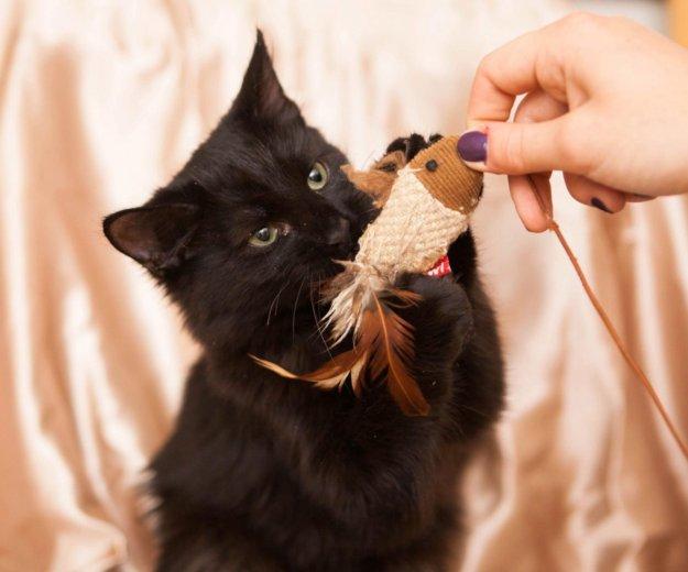 Котик миша ищет дом. Фото 3. Москва.