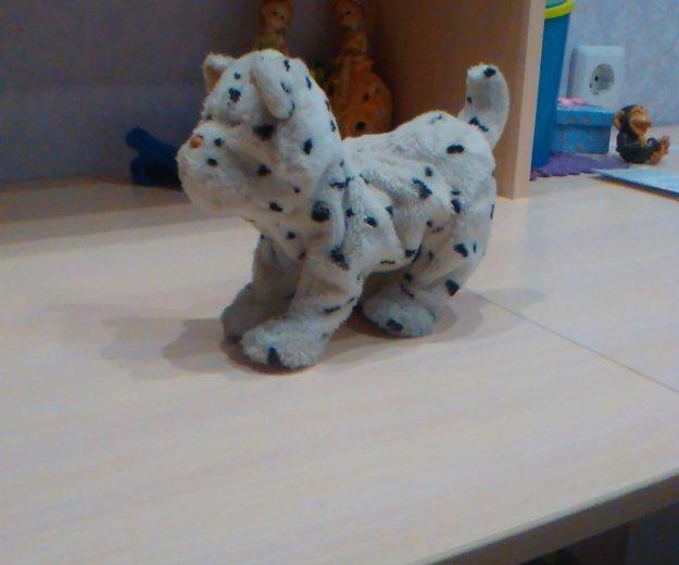 Собачка игрушка. Фото 1. Чита.