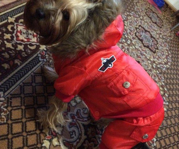 Комбенизон для собак, новый, причина продажи-мал. Фото 1. Ижевск.