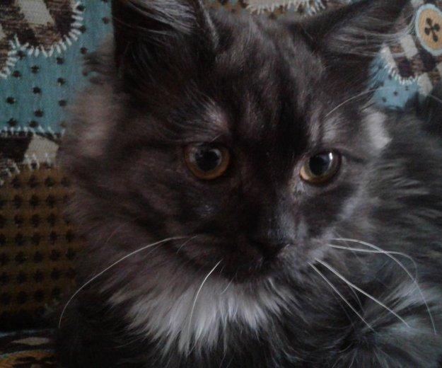 Кошка в добрые руки. Фото 2. Луховицы.