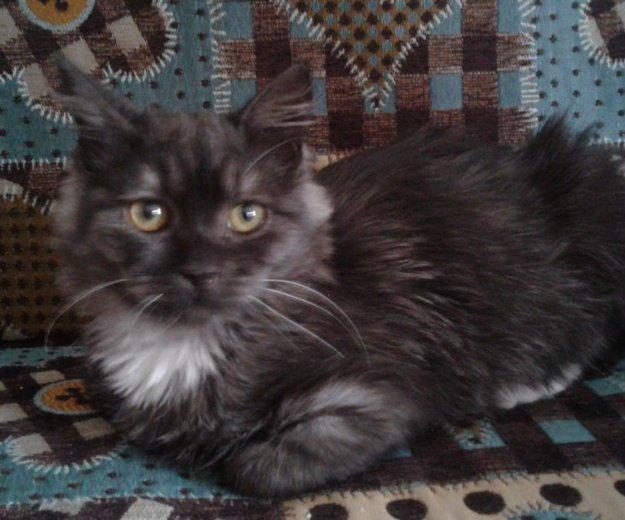 Кошка в добрые руки. Фото 3. Луховицы.