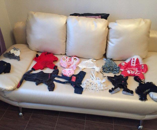 Одежда для маленькой собачки. Фото 1. Химки.
