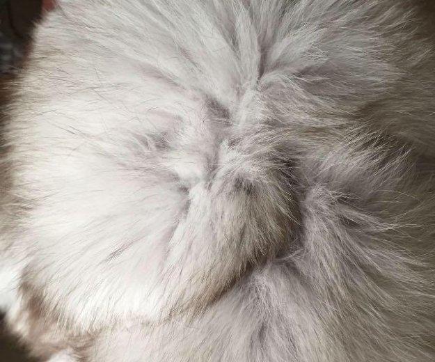 Жилетка (натуральный писец). Фото 2. Раменское.