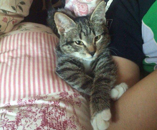 Котенок в добрые руки. Фото 4. Новосибирск.