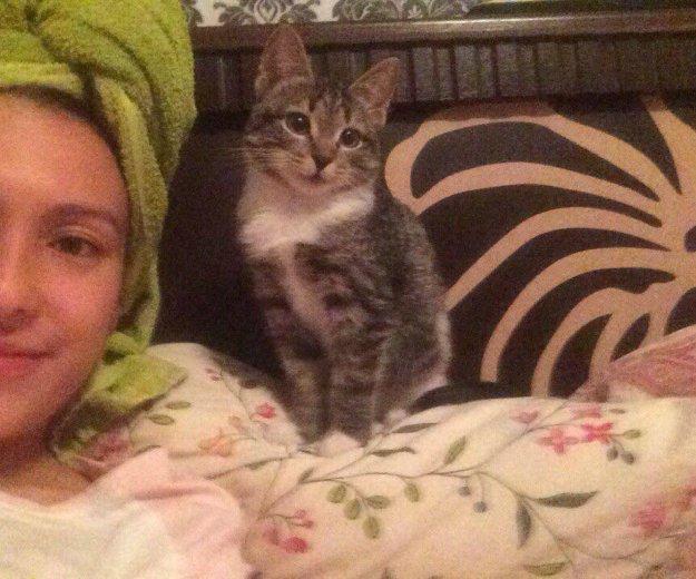 Котенок в добрые руки. Фото 1. Новосибирск.