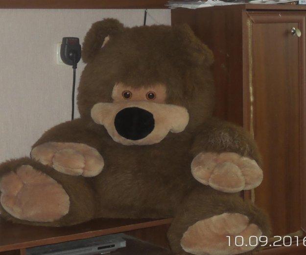Медведь. Фото 1. Томск.