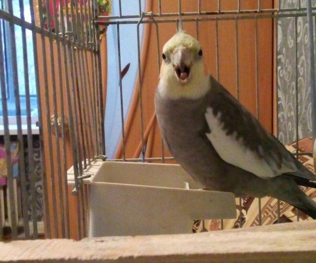 Попугай карелла с большой клеткой. Фото 1. Мичуринск.