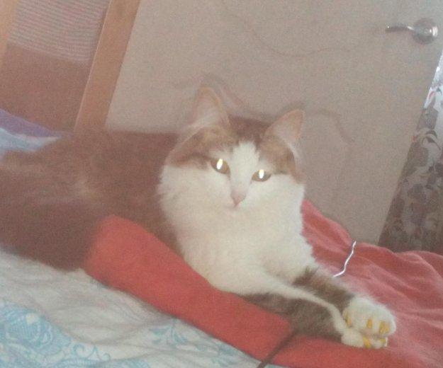 Кошка,1.5 года. Фото 1. Пермь.