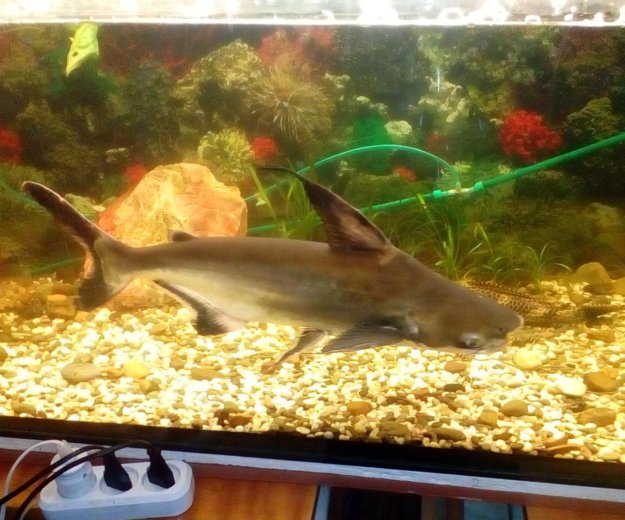 Аквари.рыбка. Фото 1. Балаково.