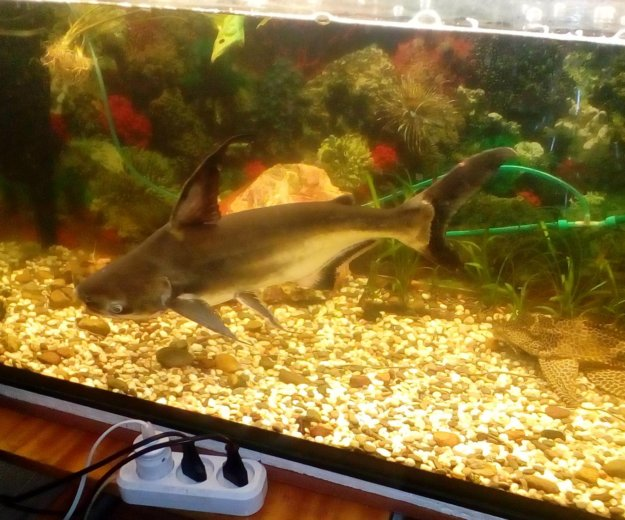 Аквари.рыбка. Фото 3. Балаково.