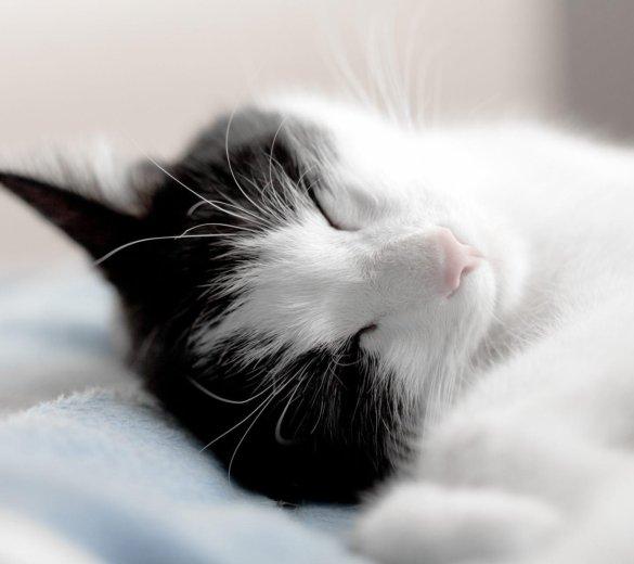 Передержка кошек, котят. маленьких собачек. Фото 1. Домодедово.