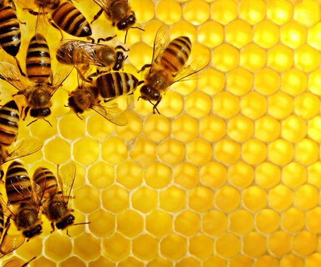 Мёд липа+разнотравье. Фото 1. Курск.