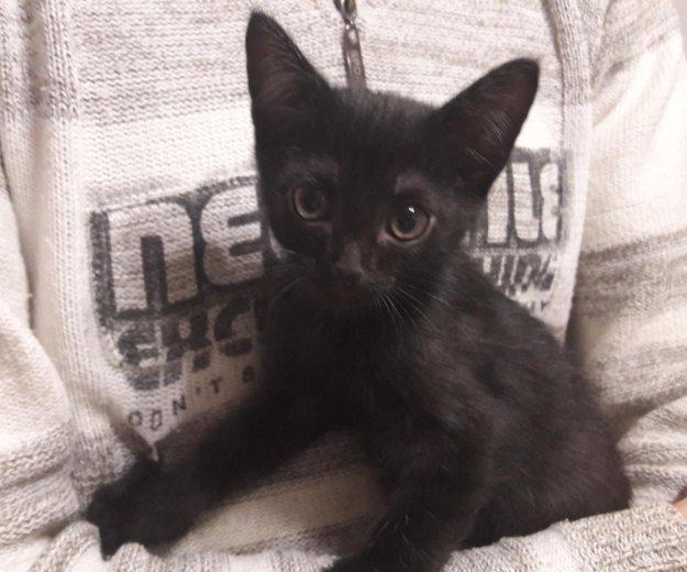 Котенок. Фото 1.