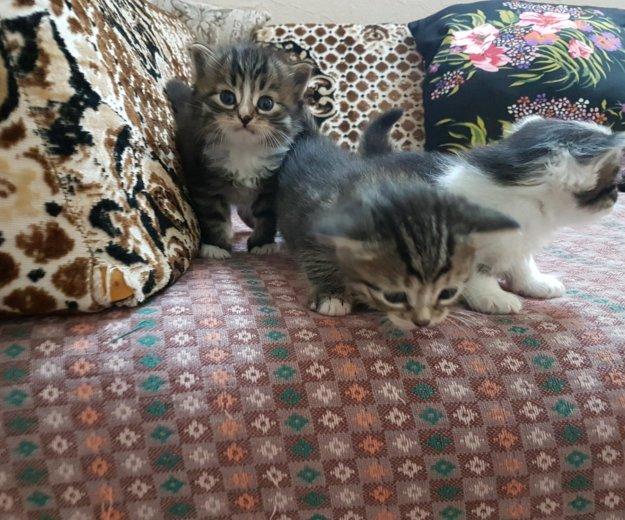 Котята. Фото 2. Самара.