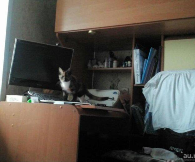Кровать-чердак. срочная продажа!. Фото 2. Красноярск.