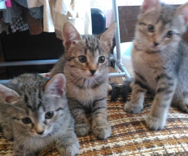 Котята в добрые руки. Фото 3. Москва.