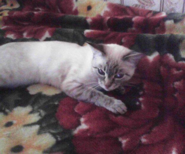 Срочно нужен кот для вязки. Фото 1.