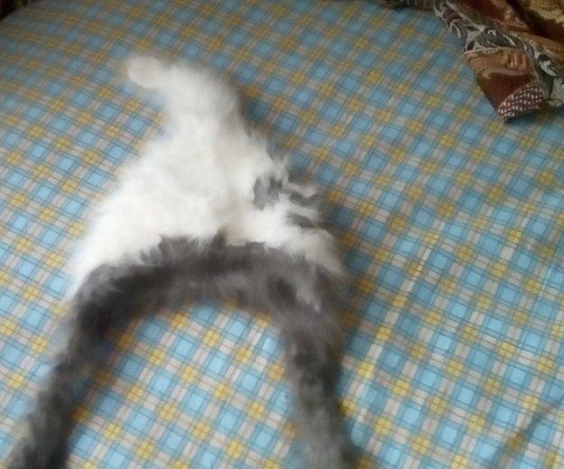 Шапка кроличья. Фото 2.