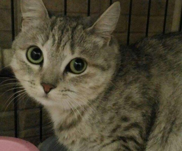 Шикарная кошка в дар. Фото 1.