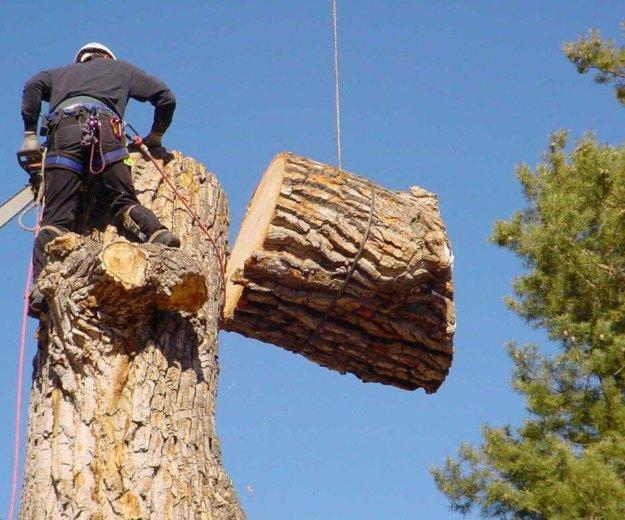 Спил аварийных деревьев. Фото 1. Северодвинск.