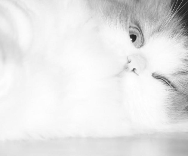 Кошка рада бесплатно. Фото 3.