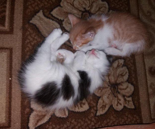 Котята в хорошие руки. Фото 4.