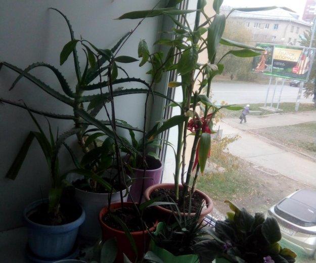 Растения. Фото 1. Екатеринбург.