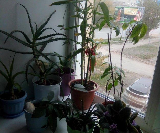 Растения. Фото 2. Екатеринбург.