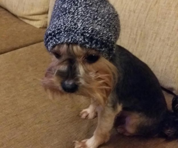 Шапки капор для собак. Фото 1. Москва.
